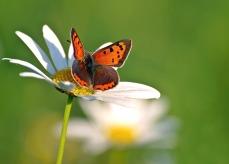 butterfly-1415478_1280