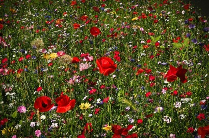 flower-meadow-1491706_640