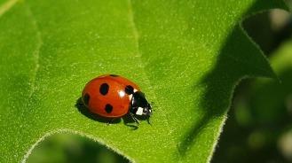 ladybug-1391741_1280
