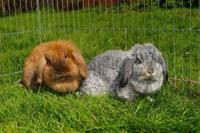 rabbit-1374613_1920