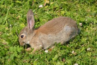 rabbit-715550_1920