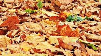 autumn-1638465_1920.jpg
